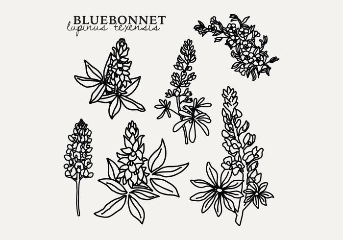 Botanische Bluebonnet vector