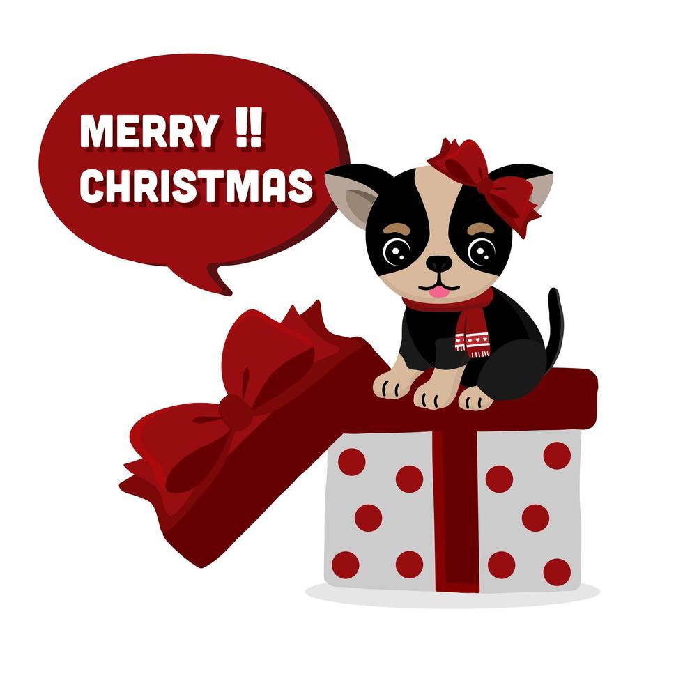 schattige chihuahua hond met sjaal en strik op cadeau vector