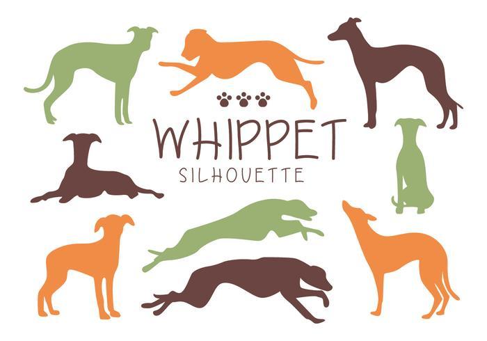 Whippet Dog Silhouette Vectoren
