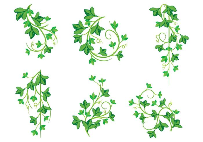 Illustraties van Poison Ivy Plants vector