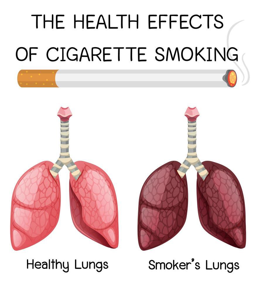 poster over gezondheidseffecten van het roken van sigaretten vector