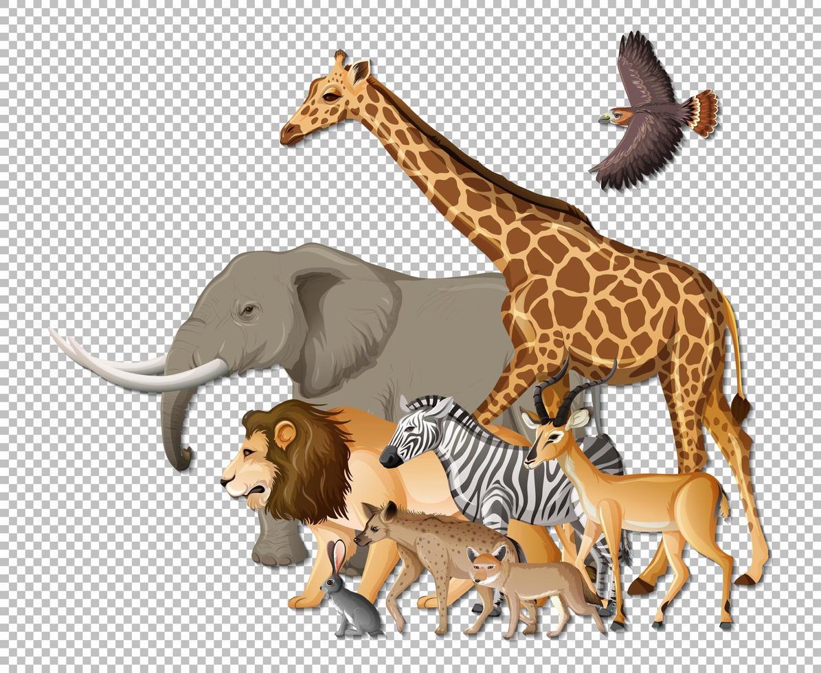 groep wilde Afrikaanse dieren op transparante achtergrond vector