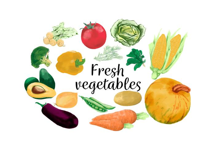 Watercolour Fresh Carrot Avocado Corn Tomatoes And Vegetables vector
