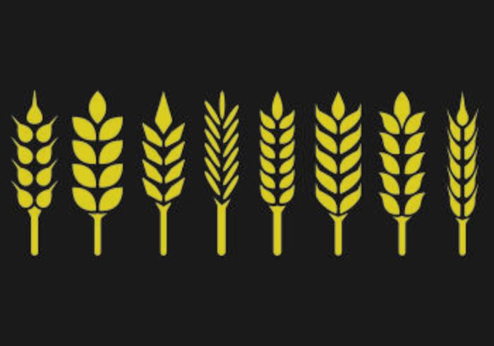 Set van tarwe oren pictogram vector