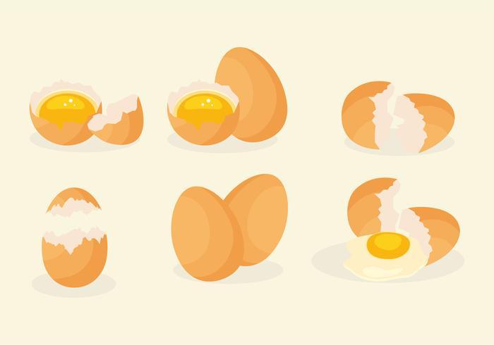 Realistische gebroken eieren vector