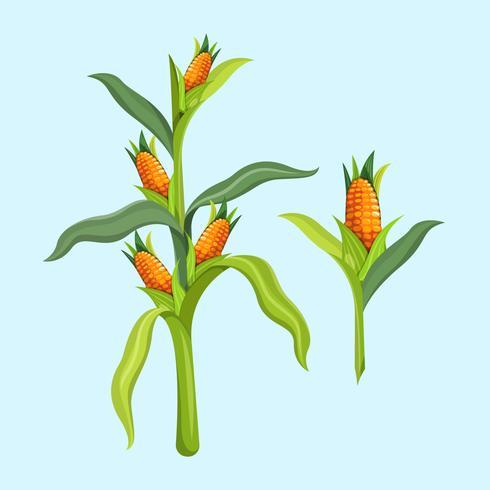 maïs stengels vector illustratie