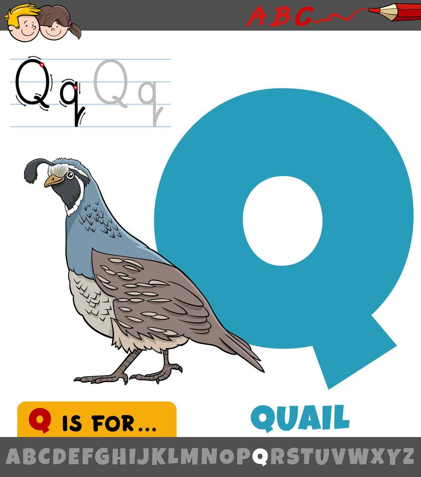 letter q met kwartelvogel dierlijk karakter vector