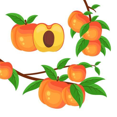 Boomtak met perziken vector