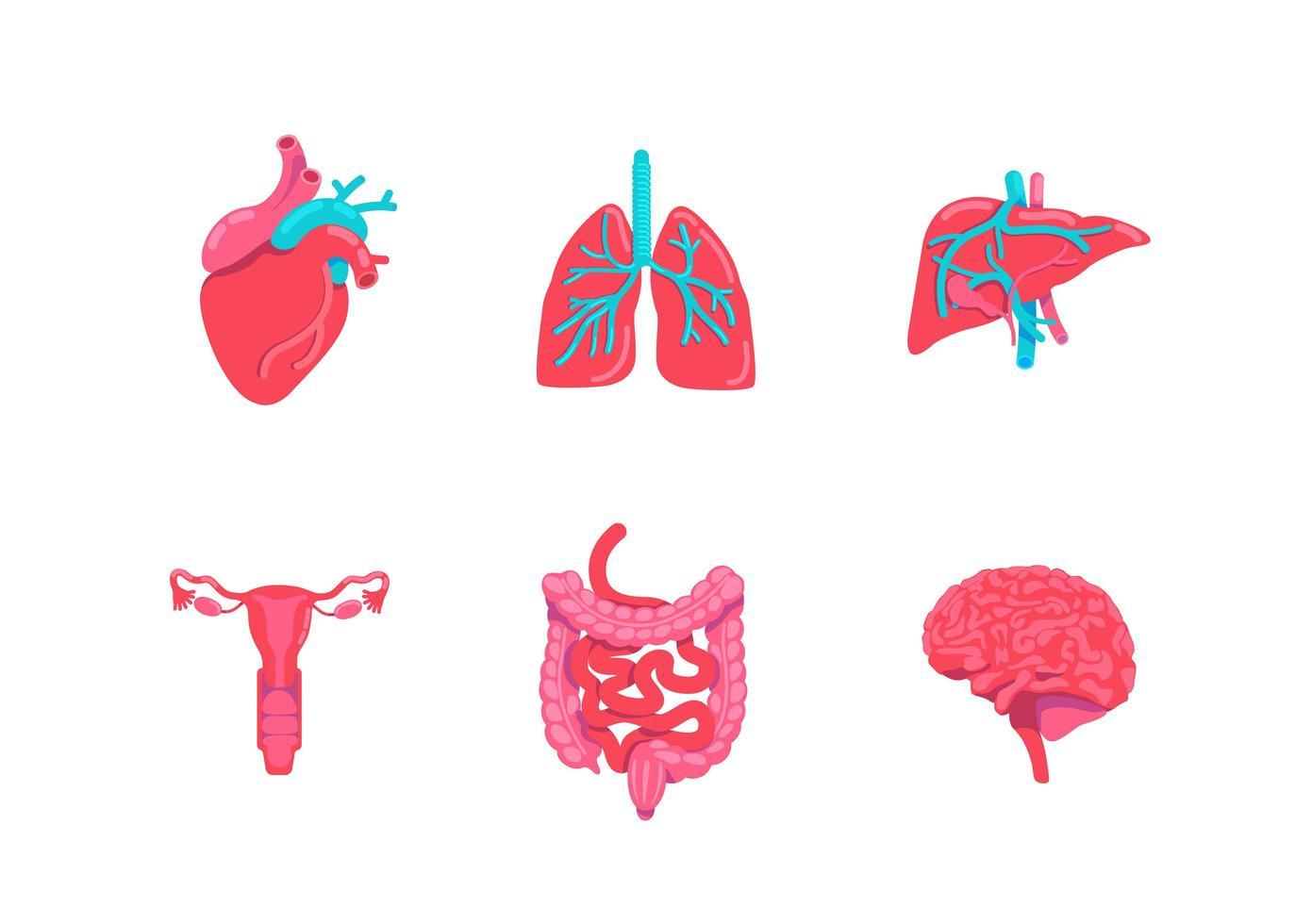 menselijk lichaam anatomie objecten instellen vector