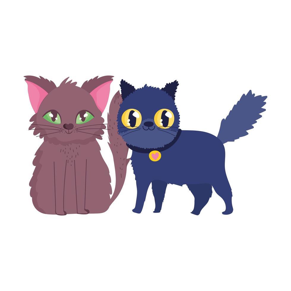 kat en zwarte kat met kraag cartoon katachtige huisdieren vector