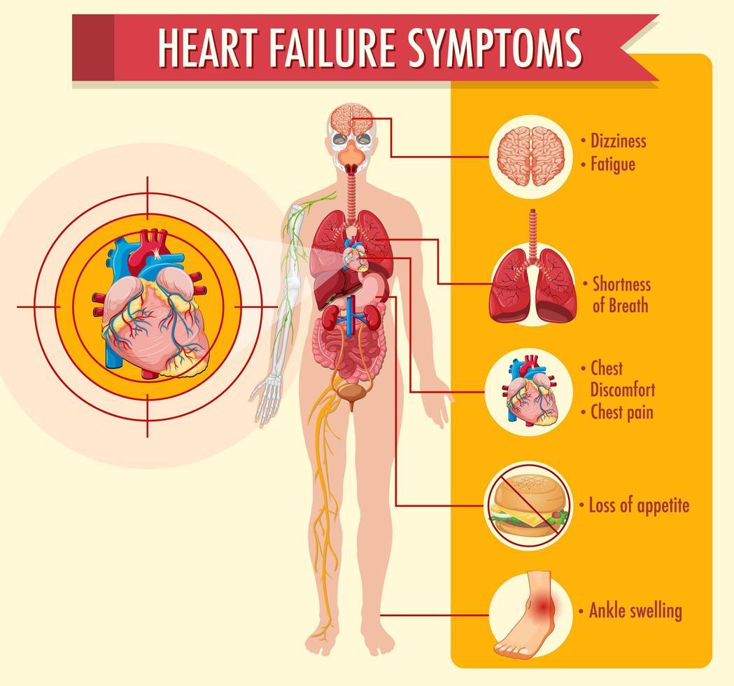 hartfalen symptomen informatie infographic vector