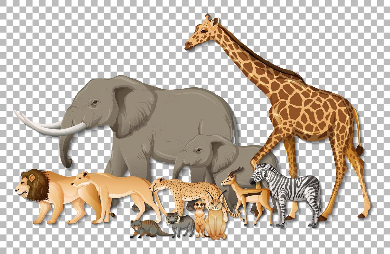 groep wilde Afrikaanse dieren vector