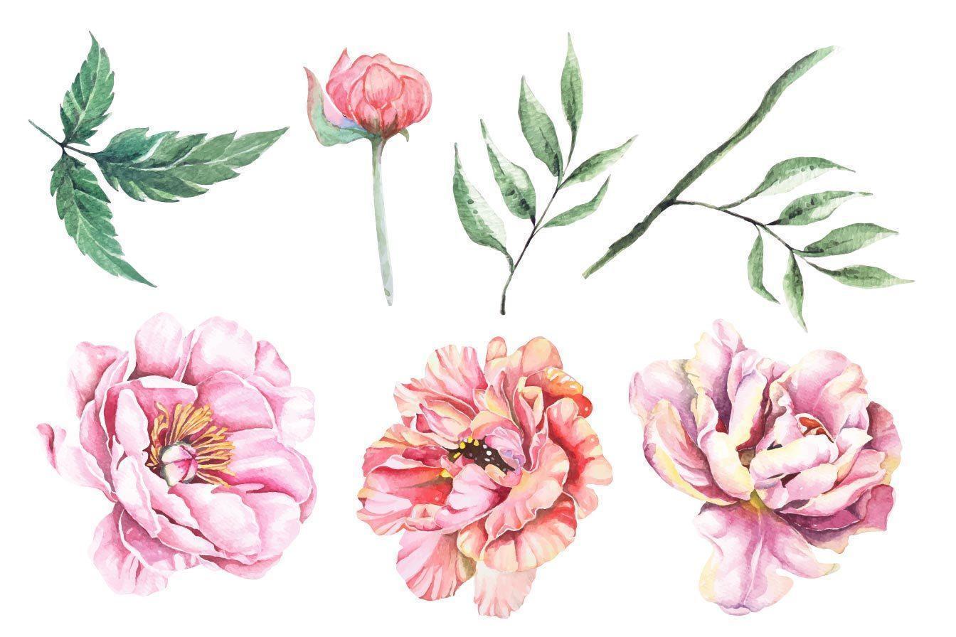 pioen aquarel set vector