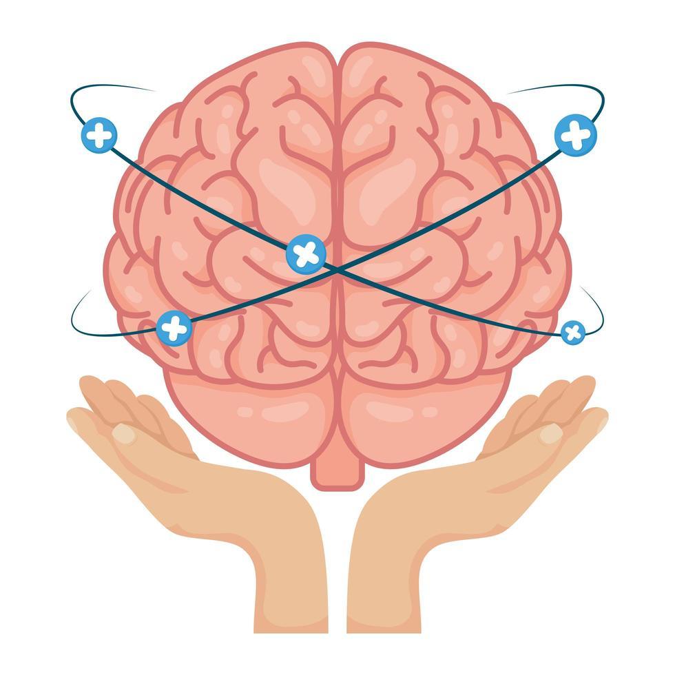 handen die menselijke hersenen met plussymbolen opheffen vector