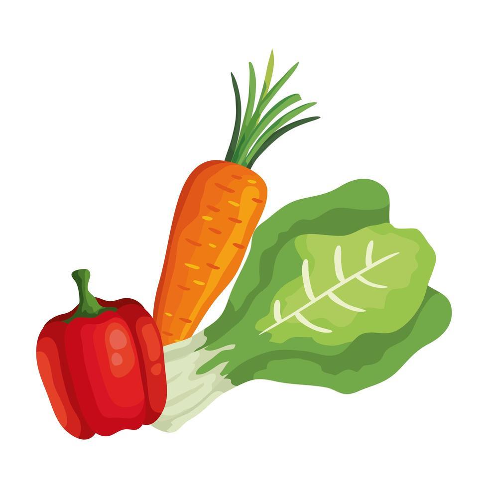 verse wortel met peper en snijbietgroenten vector