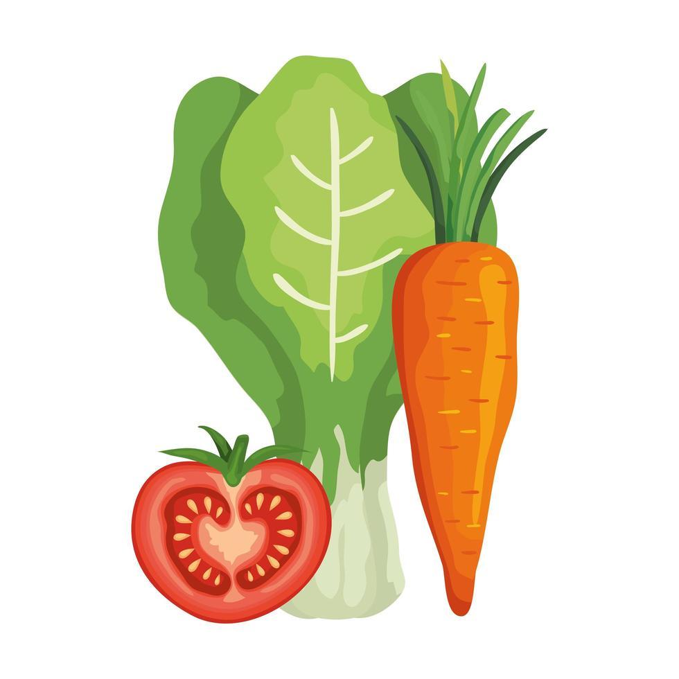 verse tomaat met snijbiet en wortel vector