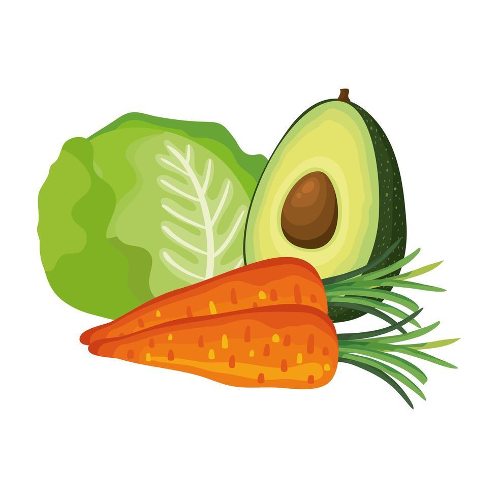 verse wortelen met avocado en sla vector