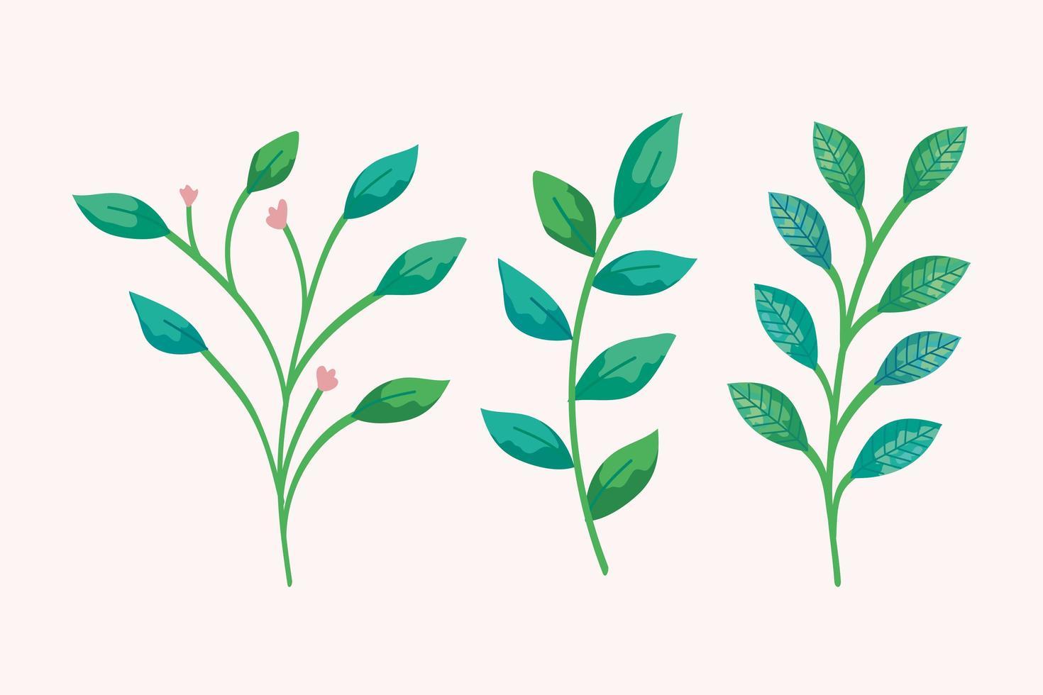 geïsoleerde bladeren decorontwerp vector