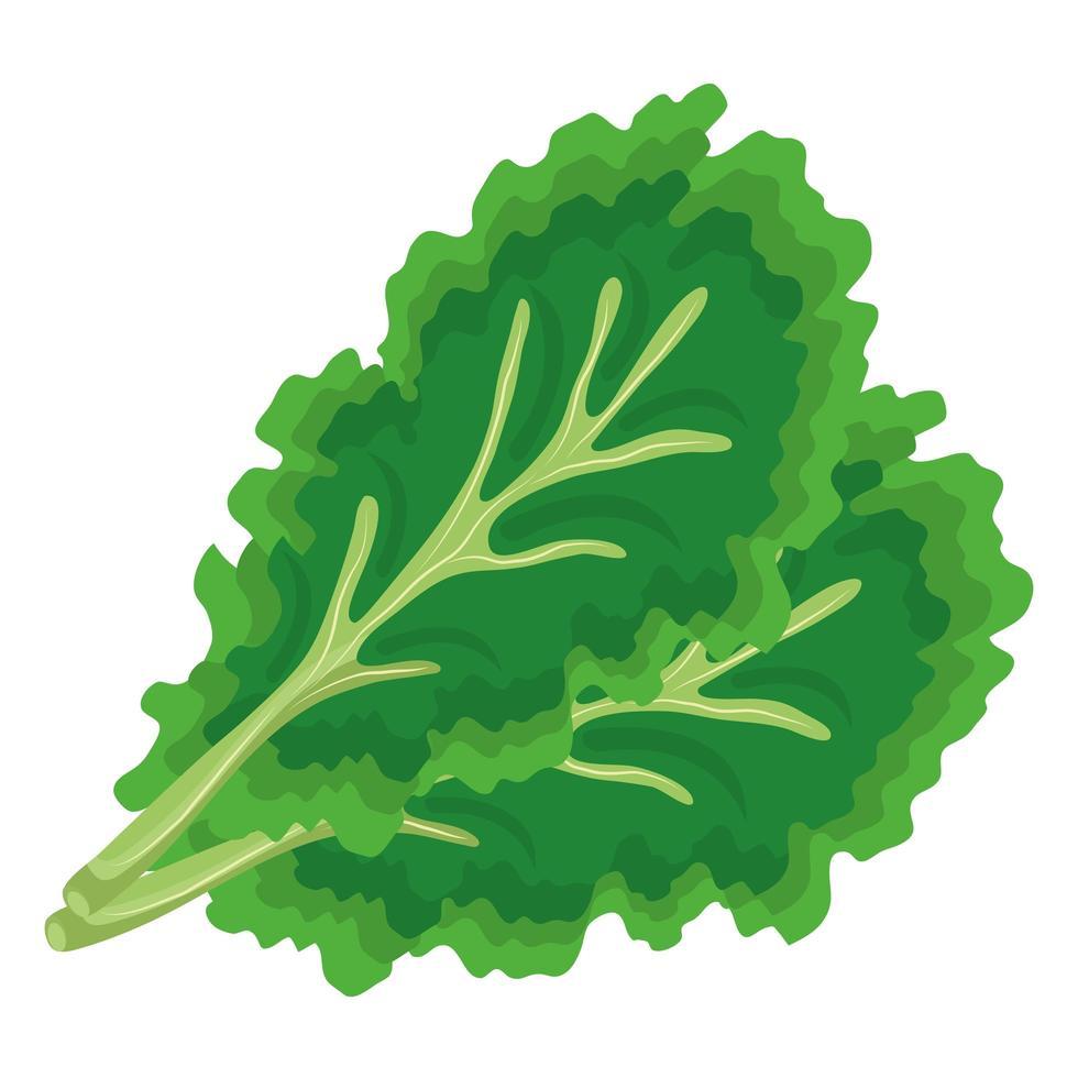 verse groente koriander gezond voedsel pictogram vector