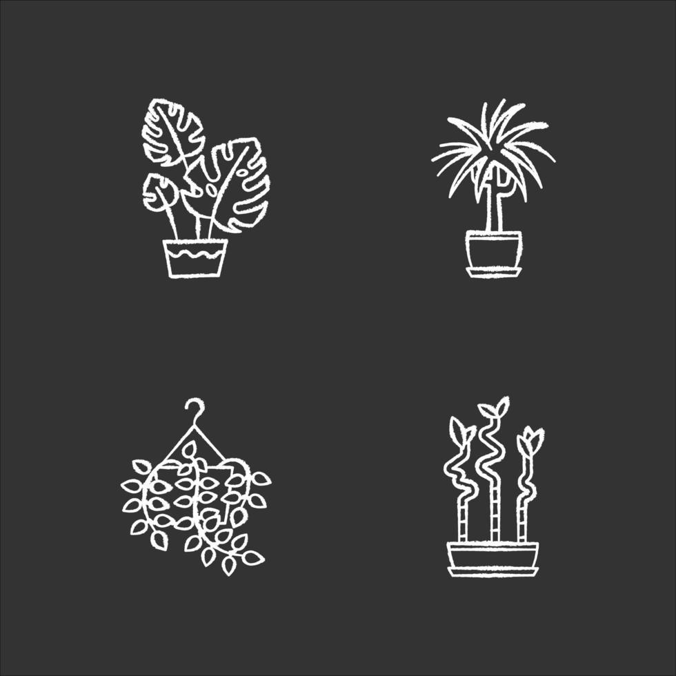gedomesticeerde planten krijt witte pictogrammen ingesteld op zwarte achtergrond. kamerplanten. decoratieve kamerplanten. huisdecoratie. pothos, dracaena. monstera, lucky bamboo. geïsoleerde vectorbordillustraties vector