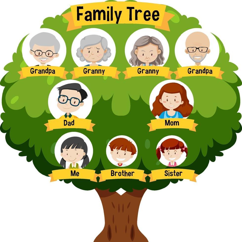 diagram met drie generaties stamboom vector