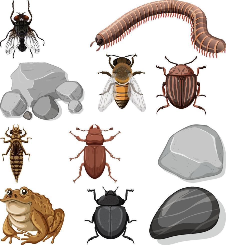 verschillende soorten insecten met natuurelementen vector