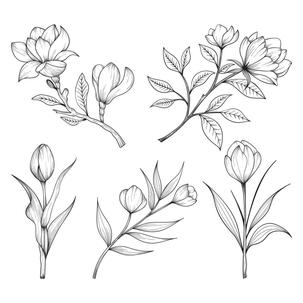 hand getrokken wilde en kruiden bloemen en bladeren illustratie geïsoleerd op een witte achtergrond. vector