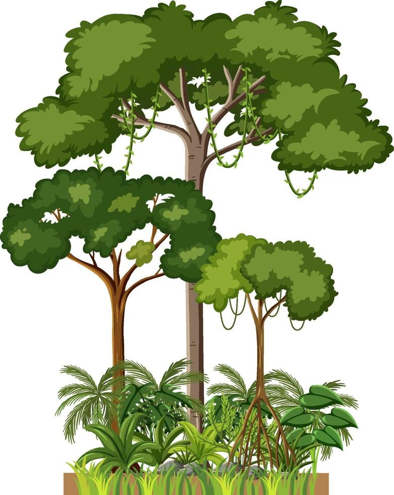 set van verschillende regenwoudbomen op witte achtergrond vector