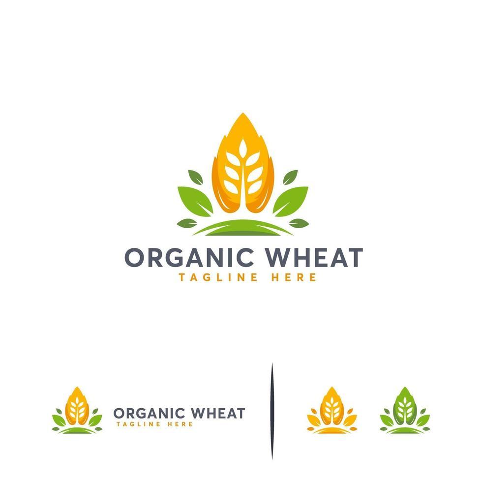 biologische tarwe logo ontwerpen concept vector, moderne tarwekorrel symbool vector