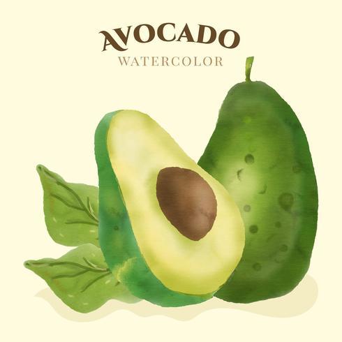 Avocado aquarel Vector