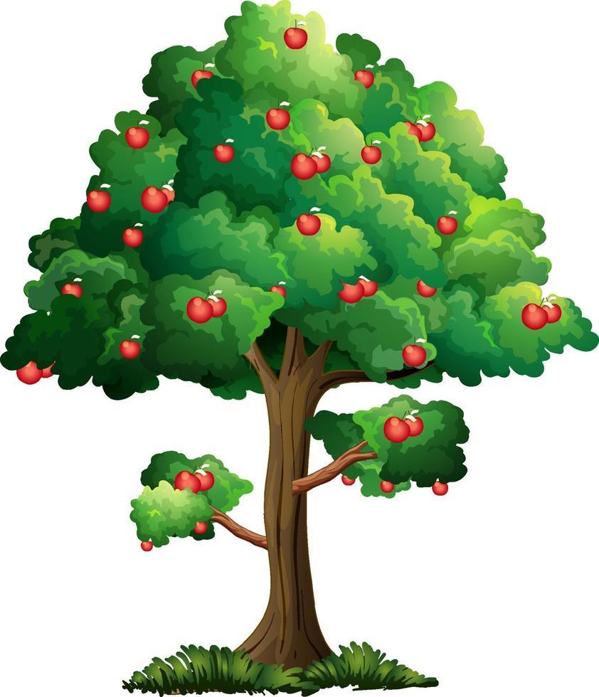 appelboom geïsoleerd op een witte achtergrond vector