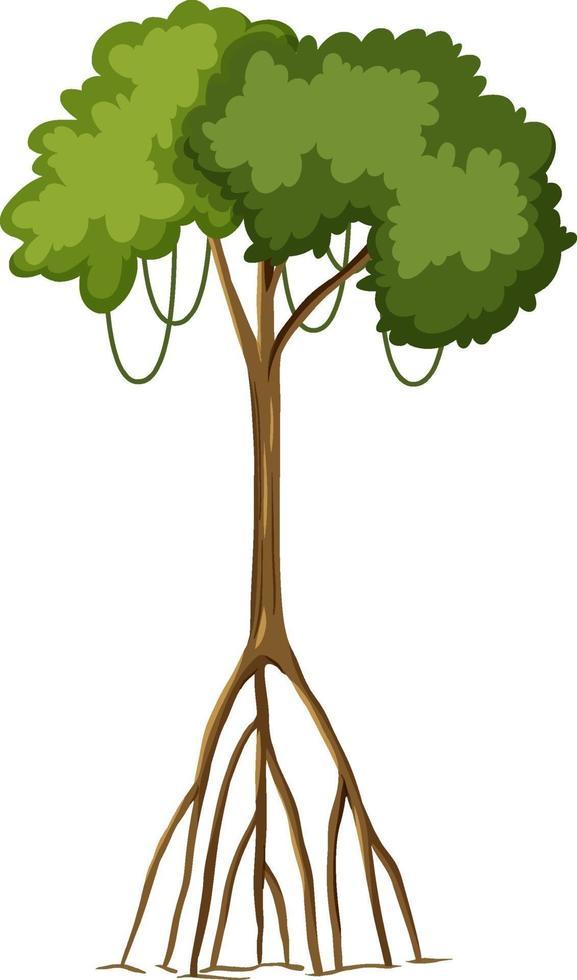 enkele regenwoudboom met grote wortels die op witte achtergrond worden geïsoleerd vector