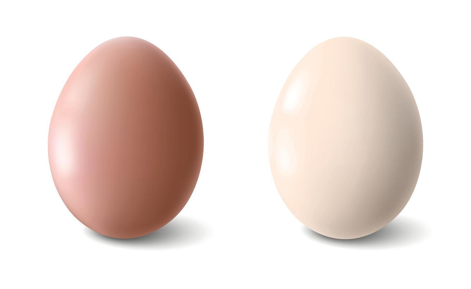 grote realistische kippeneieren met schaduw op witte achtergrond - vectorillustratie vector