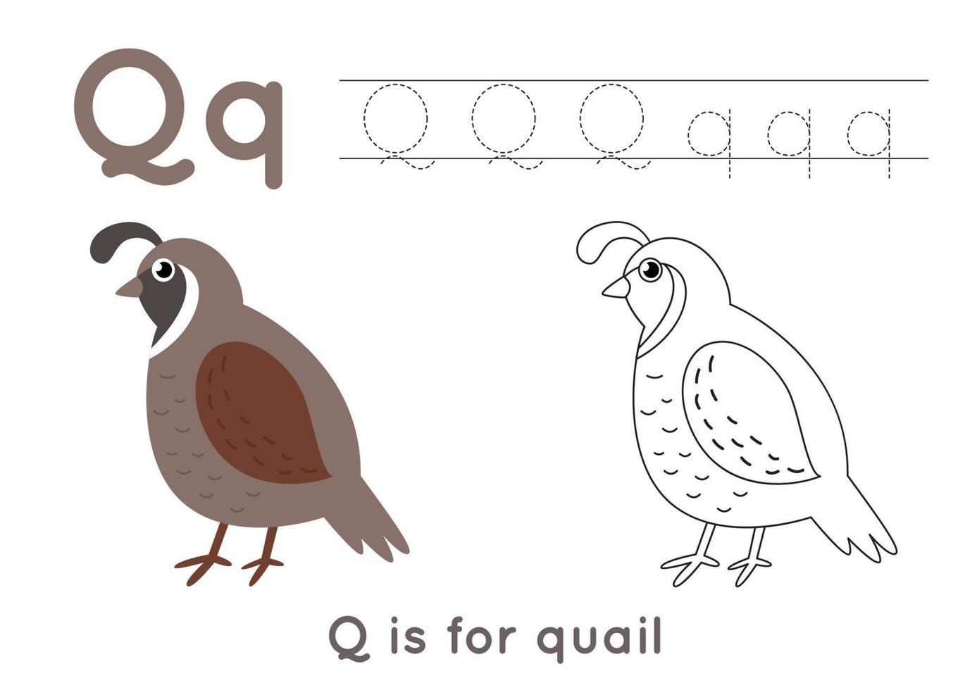 kleurplaat met letter q en schattige cartoon kwartel. vector
