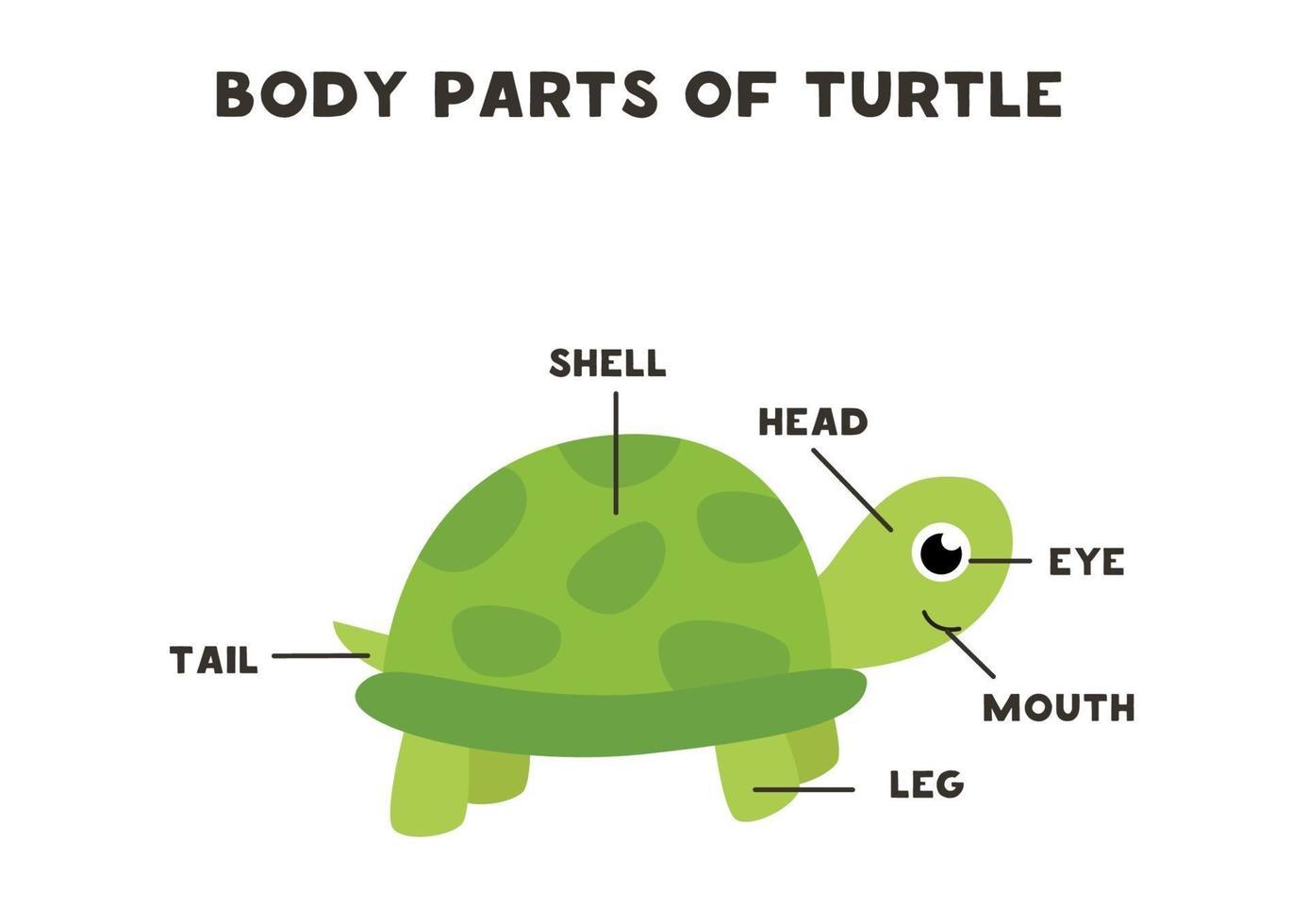 lichaamsdelen van de schildpad. regeling voor kinderen. vector