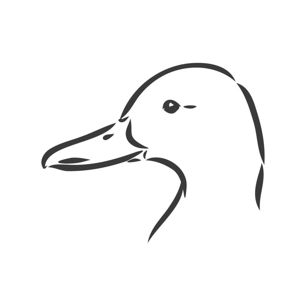eend schets vectorillustratie, geïsoleerd op een witte achtergrond, dieren bovenaanzicht. eend vector schets illustratie op witte achtergrond
