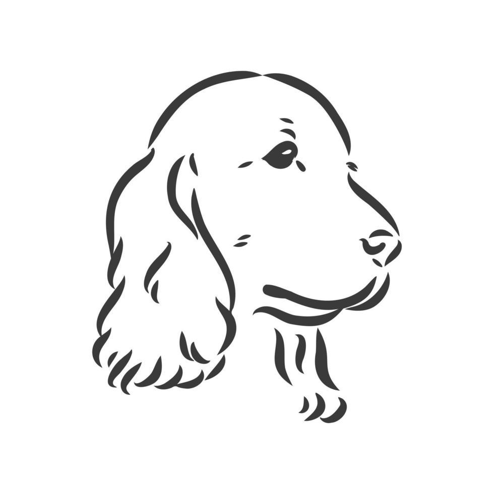 hondenras cocker spaniel snuit, schets vectorafbeeldingen zwart-wit tekening vector