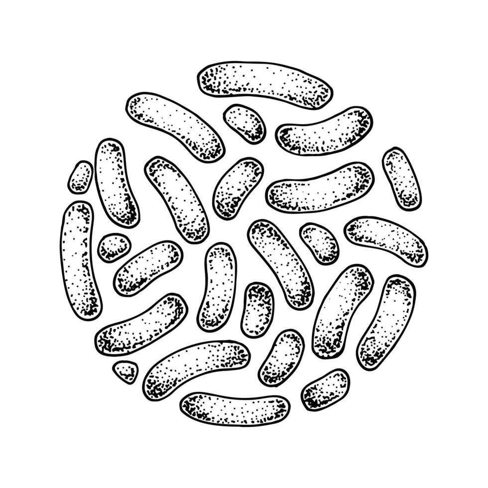 handgetekende probiotische propionibacterium-bacteriën. goed micro-organisme voor de menselijke gezondheid en regulering van de spijsvertering. vectorillustratie in schetsstijl vector