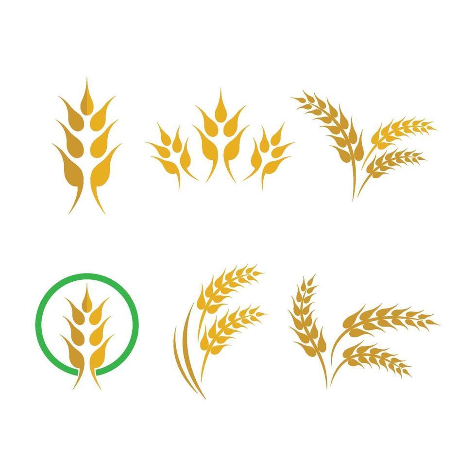tarwe logo afbeeldingen vector