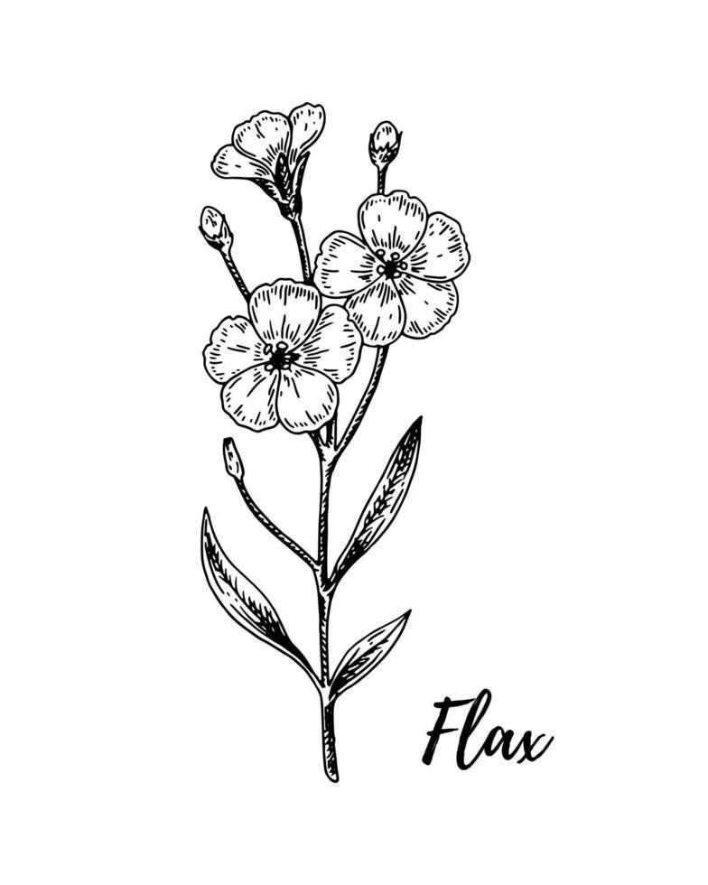 hand getrokken vlas tak met bloemen. vectorillustratie in schetsstijl voor linnenzaden en olieverpakkingen vector
