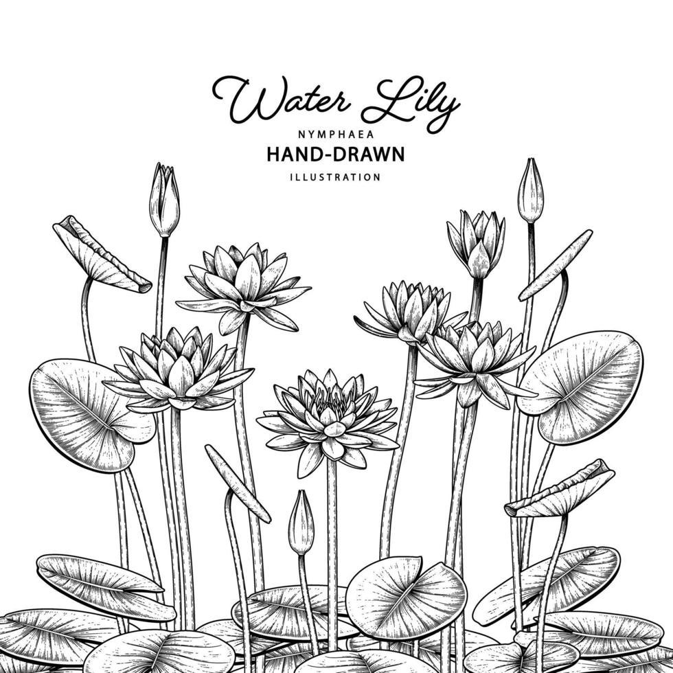 schets bloemen decoratieve set. waterlelie bloemtekeningen. zwarte lijntekeningen geïsoleerd op een witte achtergrond. hand getrokken botanische illustraties. elementen vector. vector
