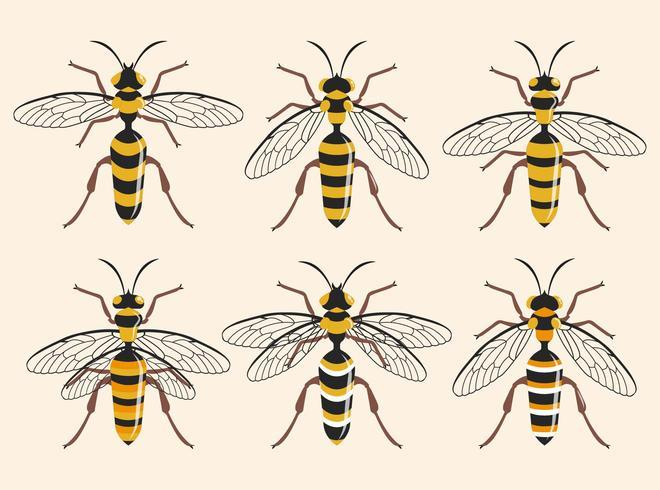 Verschillende soorten Hornet vectorillustratie vector