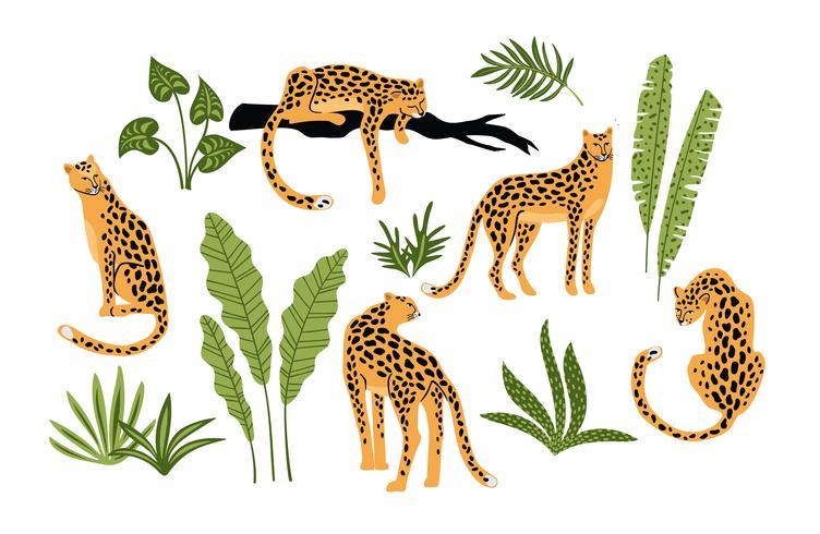 Vestor set van luipaarden en tropische bladeren. vector