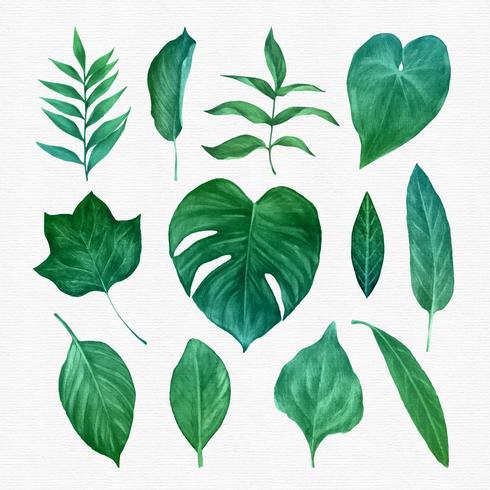 Groene bladeren Clipart Set vector