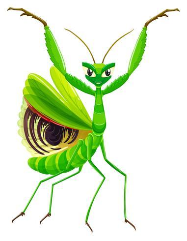 Groene bidsprinkhaan op witte achtergrond vector
