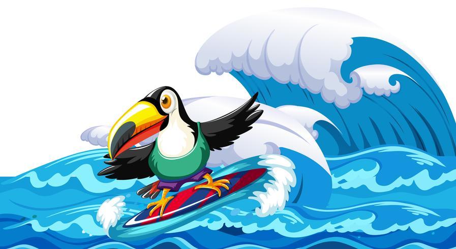 Toucan die op grote golf surfen vector