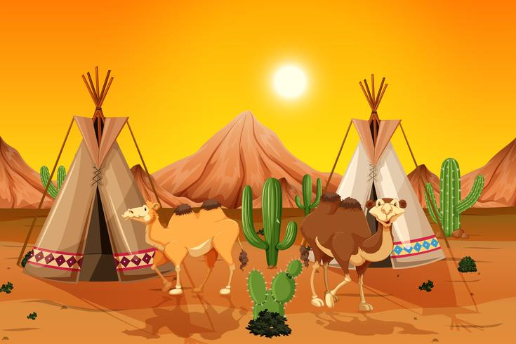 Kamelen en tipi in woestijn vector