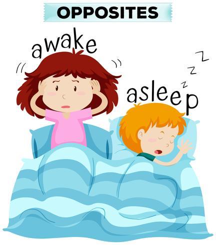 Tegenover woorden voor wakker en in slaap vector