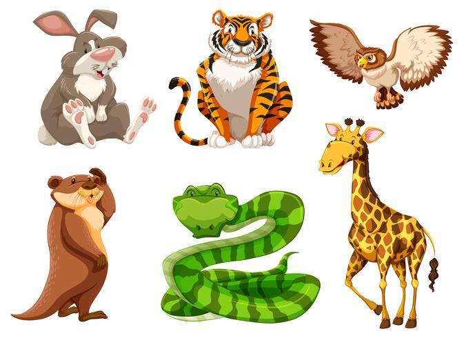 Set van verschillende dieren in het wild vector
