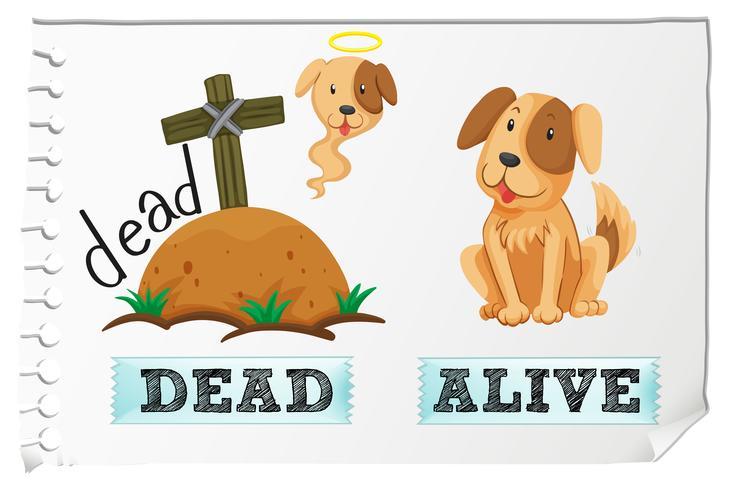 Tegenover bijvoeglijke naamwoorden dood en levend vector
